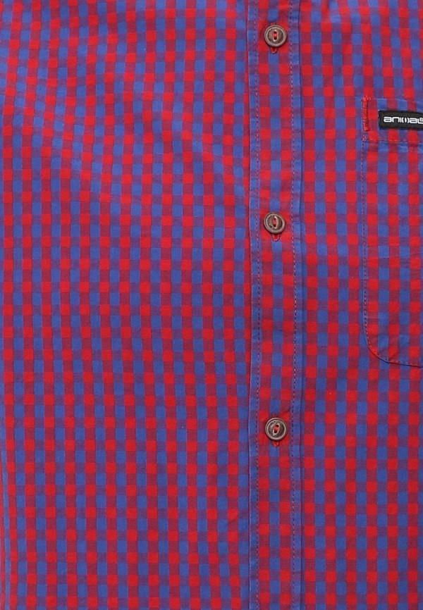 Рубашка с коротким рукавом Animal CL6SJ164: изображение 5
