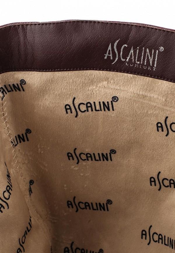 Женские сапоги Ascalini C14357: изображение 5