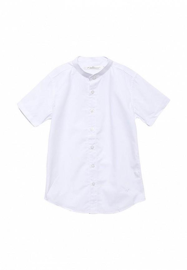 Рубашка Vitacci (Витачи) 1163028-01